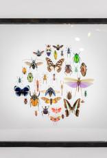 Animaux Spéciaux CADRE EN DOUBLE VERRE - Around the Beetles