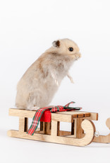 Animaux Spéciaux Hamster op slee