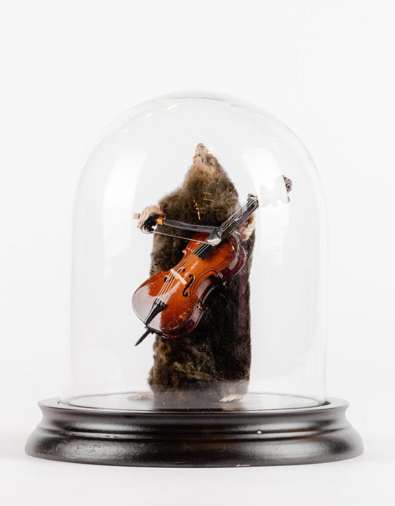 Animaux Spéciaux Stolp mol en viool