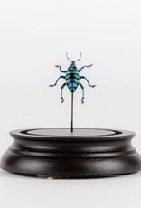 Animaux Spéciaux charançon blue - Cloche