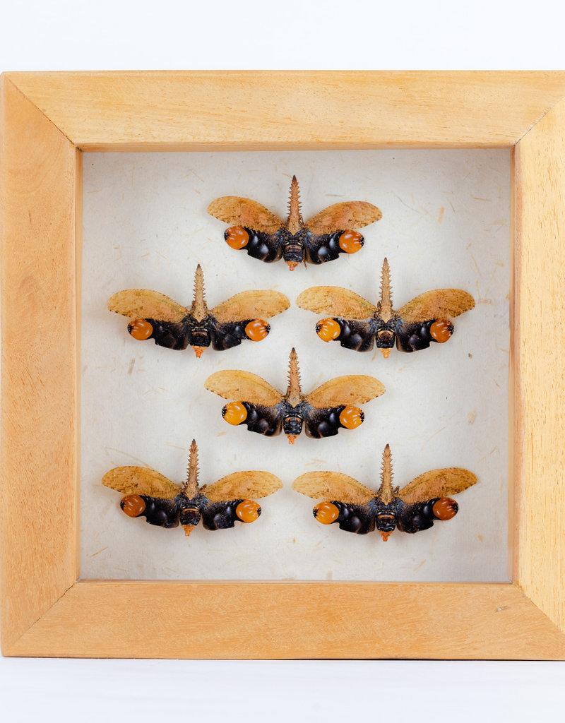 Animaux Spéciaux Houten kader exotisch met lantaarn insect