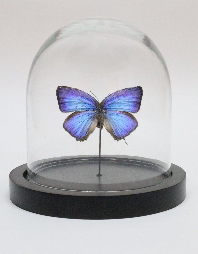 Animaux Spéciaux GLAZEN STOLP - blauwe vlinder