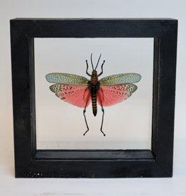 Animaux Spéciaux Dubbele glaslijst zwart 16x16cm met roze sprinkhaan