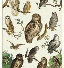 VINTAGE POSTER - Owl Chart