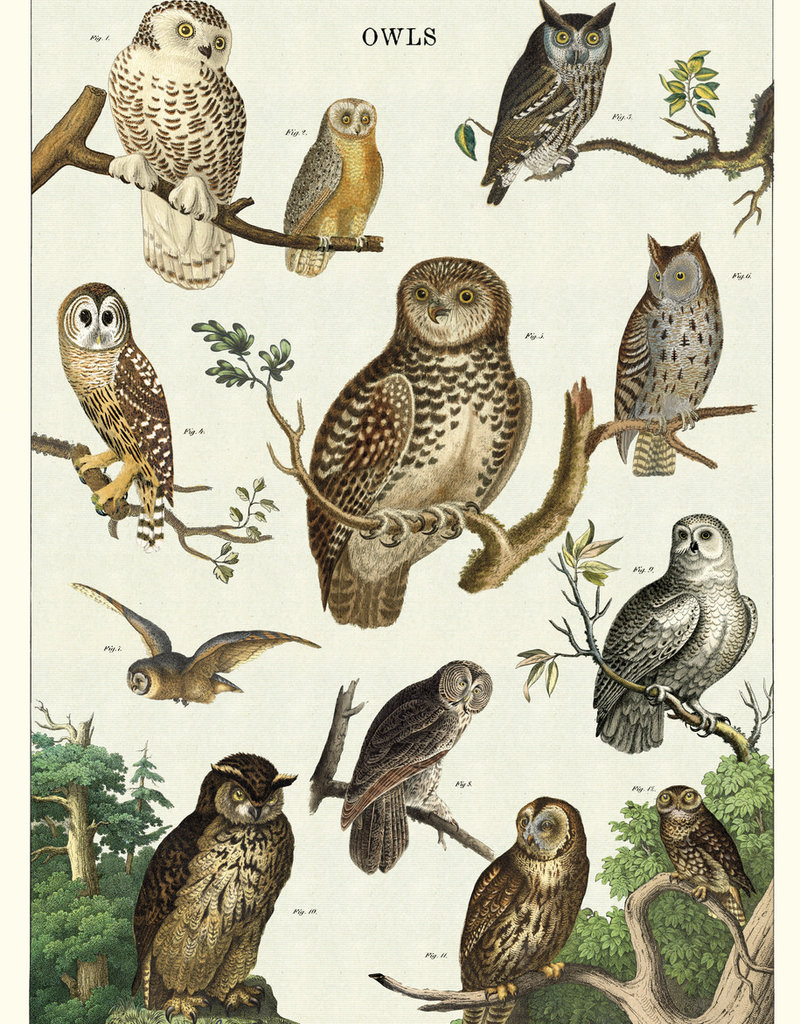 """VINTAGE POSTER - Owl Chart (20"""" X 28)"""