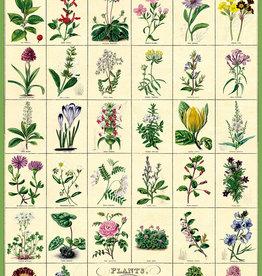 VINTAGE POSTER - Botanische tuin