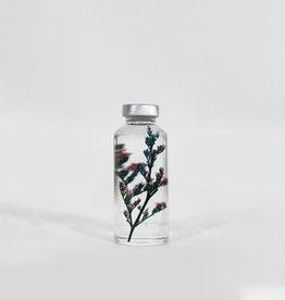 SPECIMEN DE PLANTE- Limonium tetragonum
