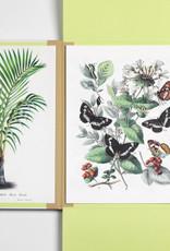 PORTFOLIO ART PRINT - Natural History