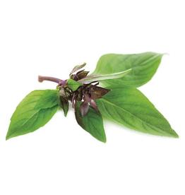 Thaise basilicum - Ocimum Basilicum