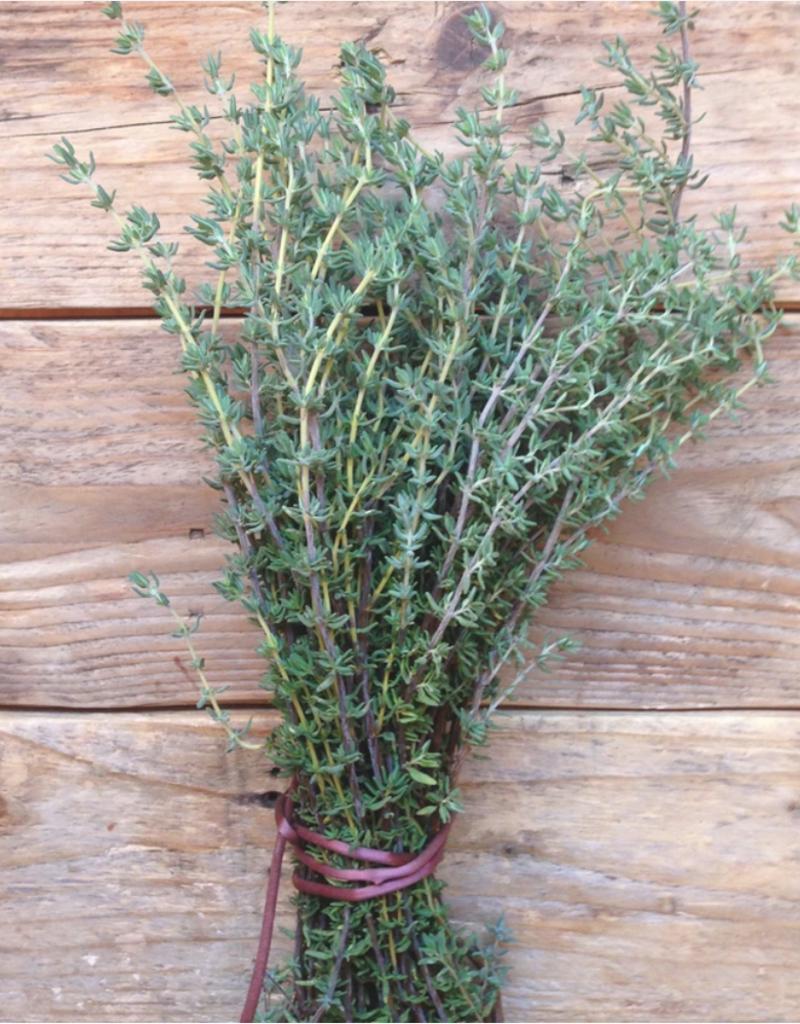 Thyme de provence  - Thymus vulgaris