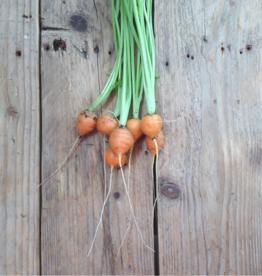 Parijse wortelen - Daucus carota