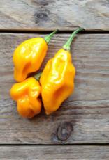 Lemon habanero hot pepper - Capsicum chinense