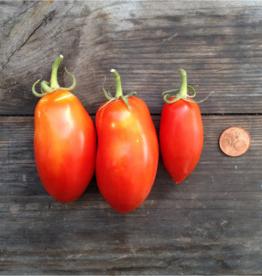 Tomaat San Marzano nano - Solanum lycopersicum