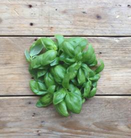 Piccolo Basilic Genovese - Ocimum basilicum