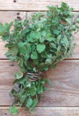 Greek oregano - Origanum vulgare