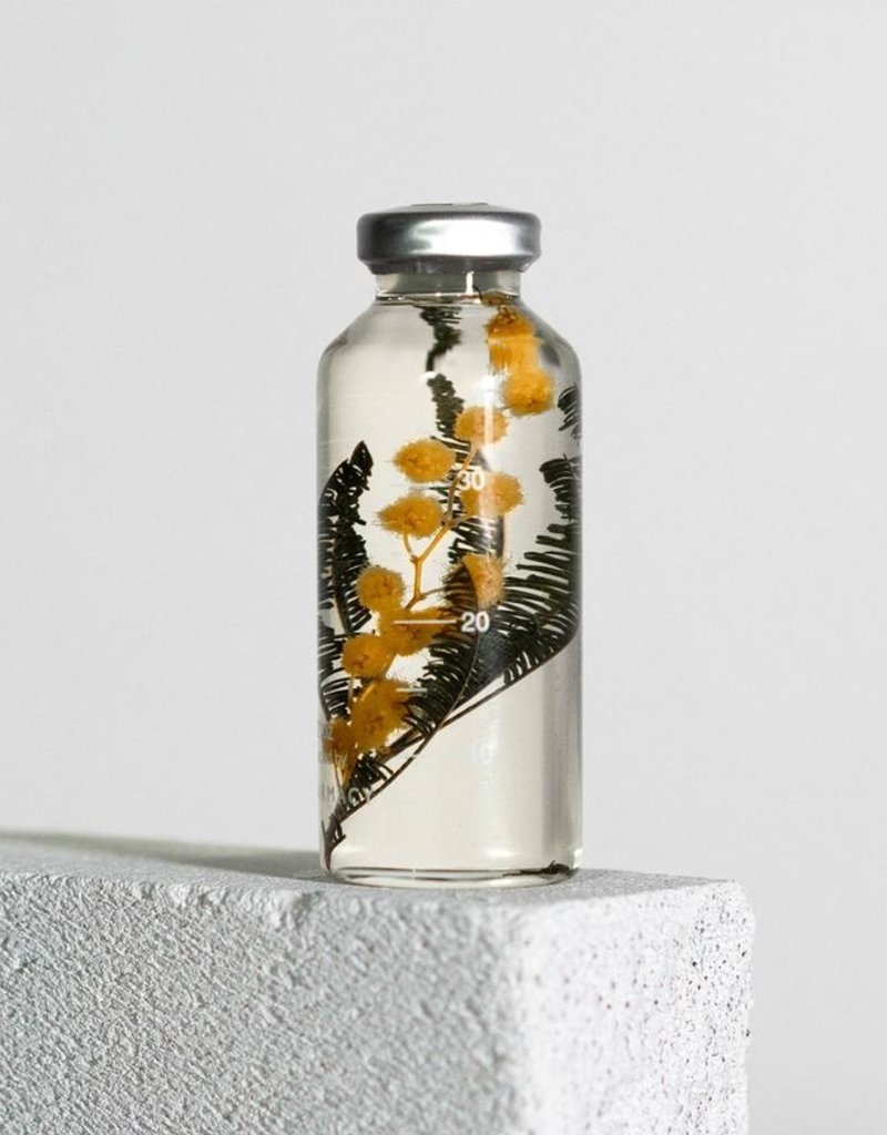 PLANTENSPECIMEN - Mimosa (Acacia dealbata)
