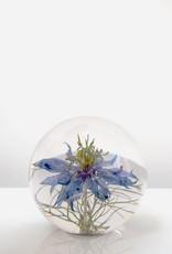 PAPERWEIGHT - Nigella Flower