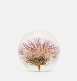 PAPERWEIGHT - Open Thistle