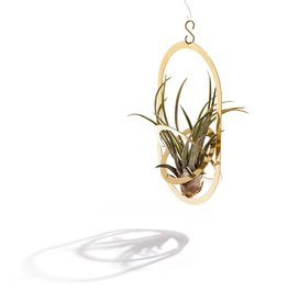 PLANT HOLDER - Air Pendant