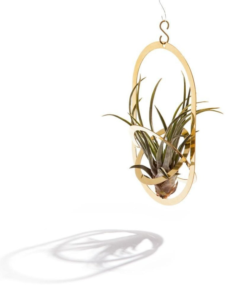 PLANT HOLDER - Air Pendant