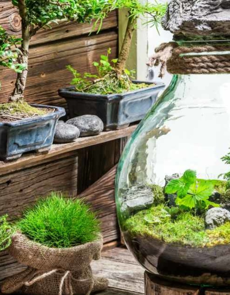 DIY - Plant Terrarium