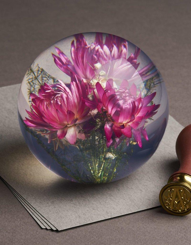 PAPERWEIGHT - Straw Flower Pink