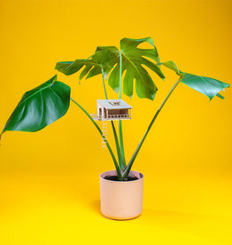 Plant-house MINIATUUR BOOMHUIS: Plantenhut