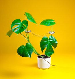 Plant-house MINIATUUR BOOMHUIS: Kraaiennest