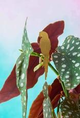 CINTRE DORE PLANTE - Perroquet