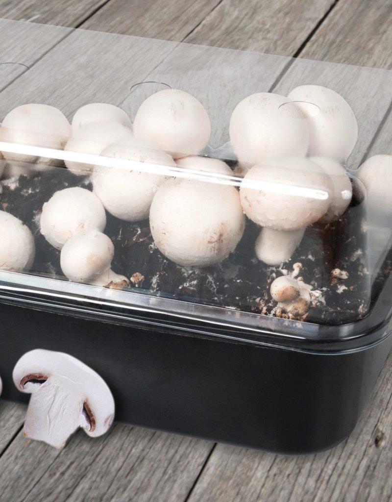GROW KIT - Mushrooms