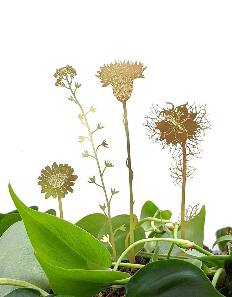 GOLDEN FLOWERS - Wild flowers