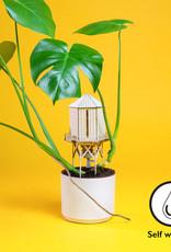 Plant-house Minature Cabane: Arrosage automatique