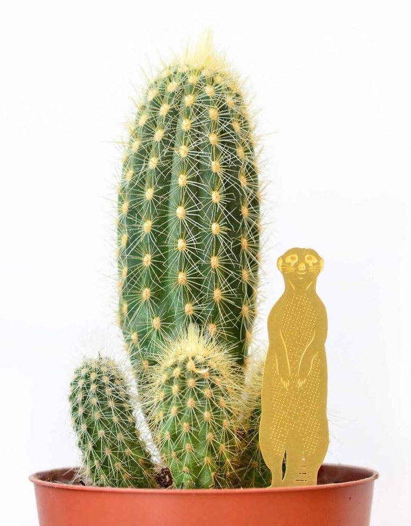 GOLDEN PLANT HANGER - Meerkat