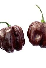 Copy of Citoen geel Habanero pikante peper- Capsicum chinense