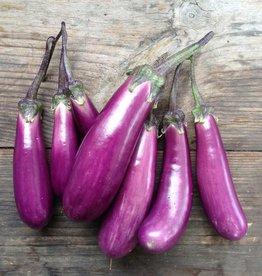 AUBERGINE Slim Jim - Solanum melongena