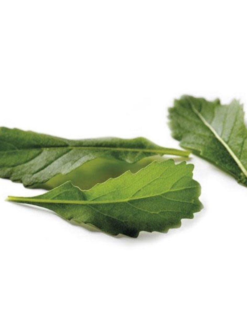 WILDE RUCOLA wildvuur-Wasabi - Diplotaxis tenuifolia
