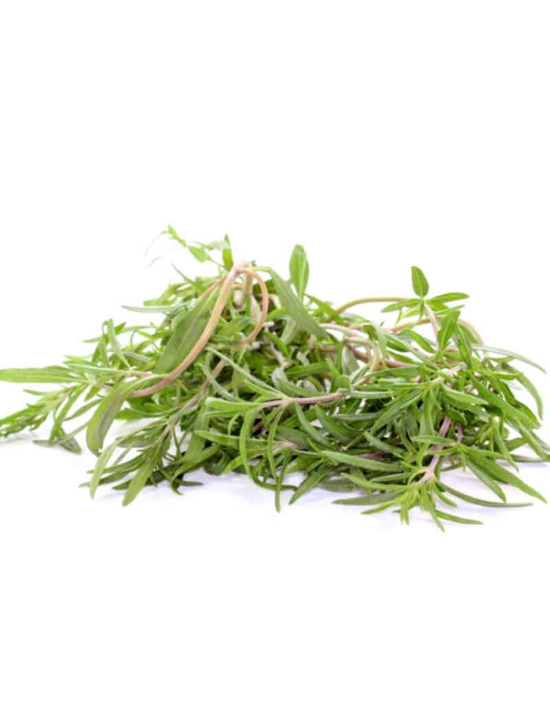 BONENKRUID- Satureja hortensis