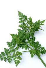 Copy of ABSINTALSEM - Artemisia absinthium