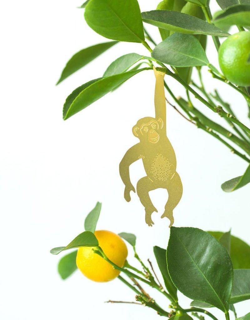 PLANT ANIMAL - Chimpanzee