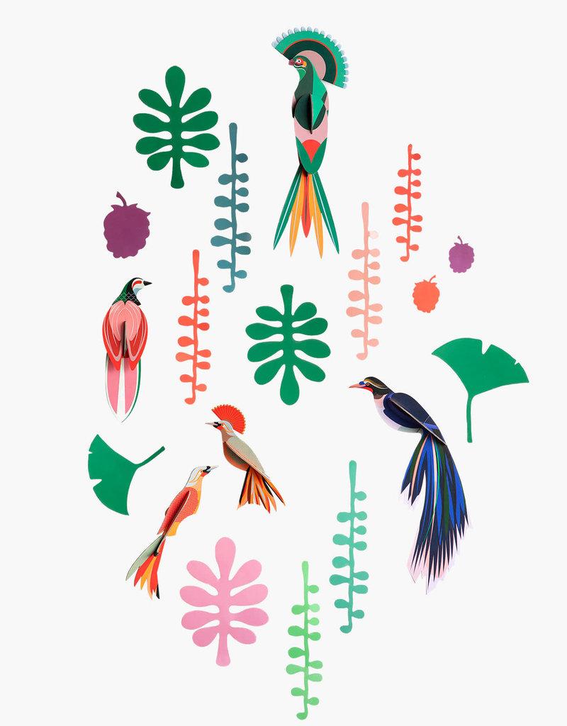 MUR DE CURIOSITES - Observateur d'oiseaux