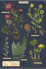 AFFICHE VINTAGE - Herbier (50x70cm)