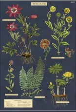 VINTAGE POSTER - Herbarium(50x70cm)