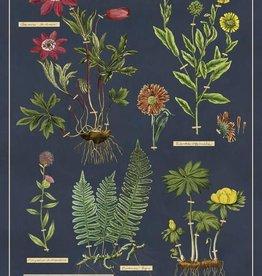 VINTAGE POSTER - Herbarium