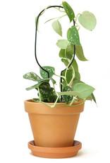 Mini Support Pour Plantes - Hoop