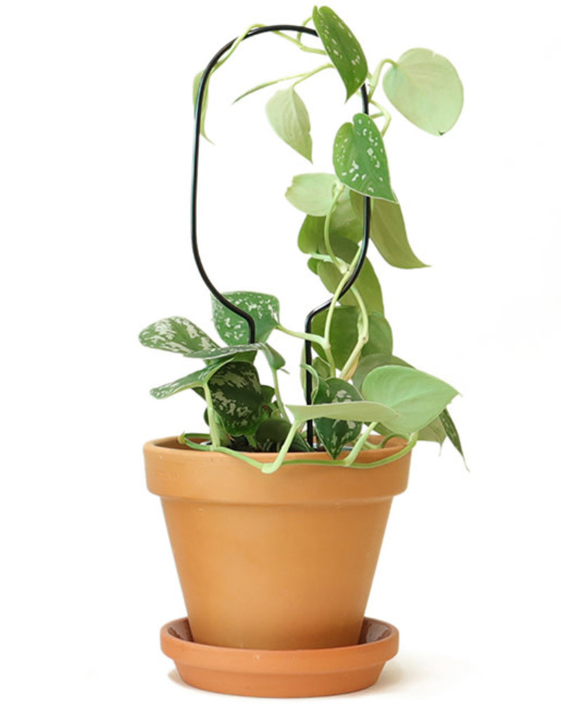 Mini Plantensteun- Hoop