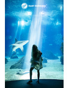 Many Mornings Ocean Life