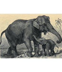 schnurkarten Elefanten