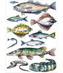 schnurkarten Ostseefische