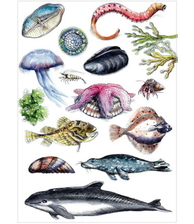 schnurkarten Leben im Wattenmeer