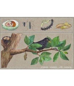 schnurkarten Sommer auf dem Apfelbaum